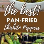 a pinterest collage of three shishito peppers photos