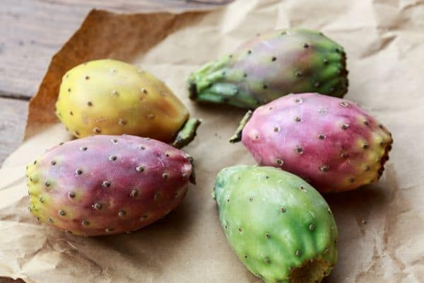 different colors of prickly pear