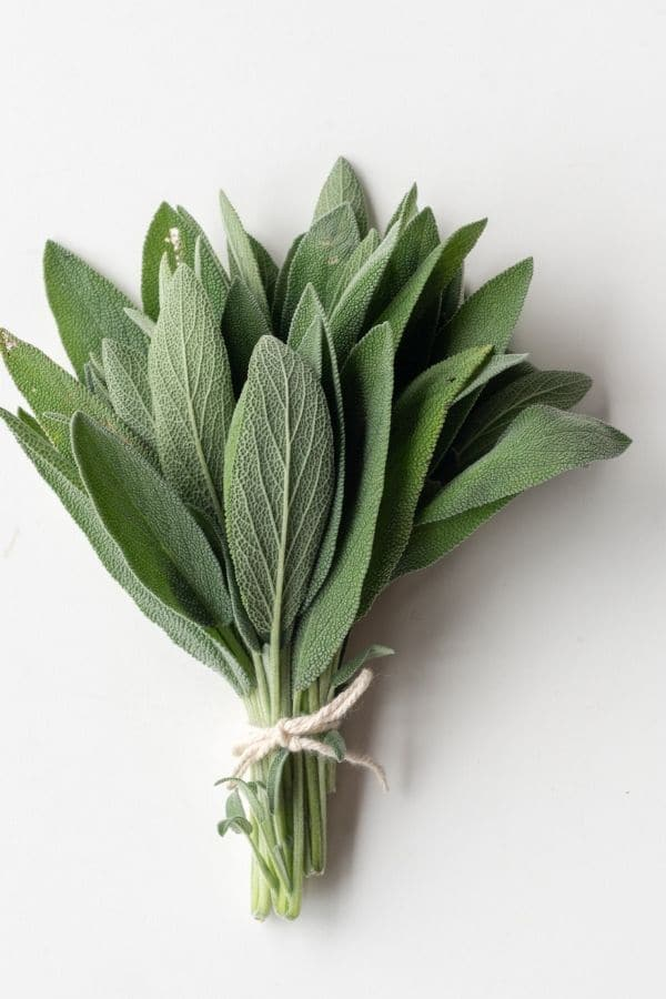 a bunch of fresh sage tied with string