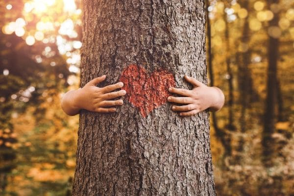 a picture of someone hugging a tree so you see the hands wrapped around the tree