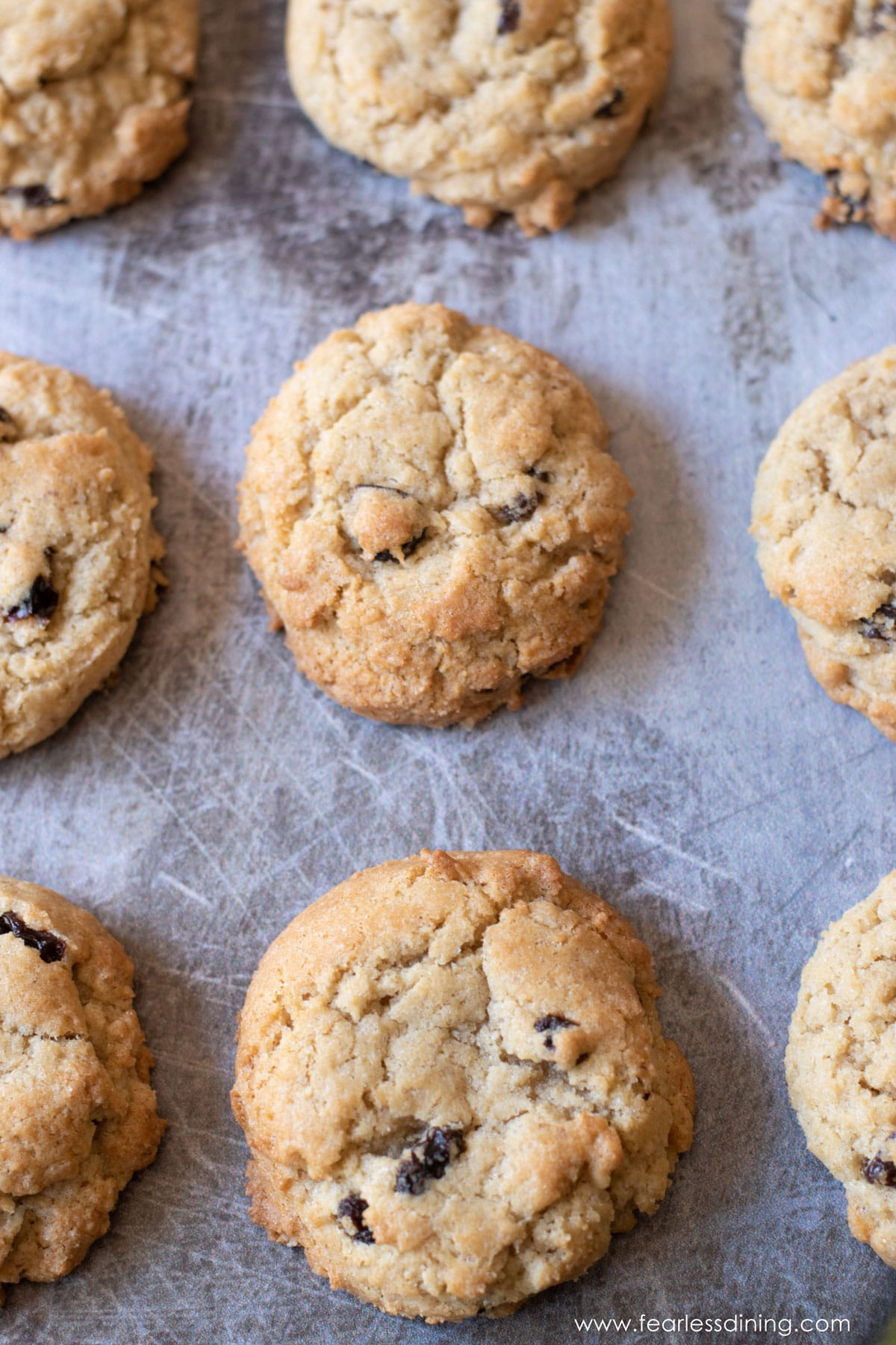 a cookie sheet with baked rum raisin cookies