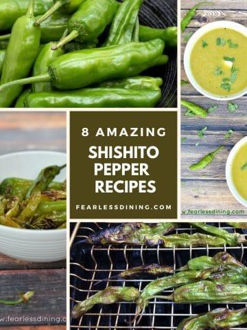 a collection of four shishito pepper recipe photos