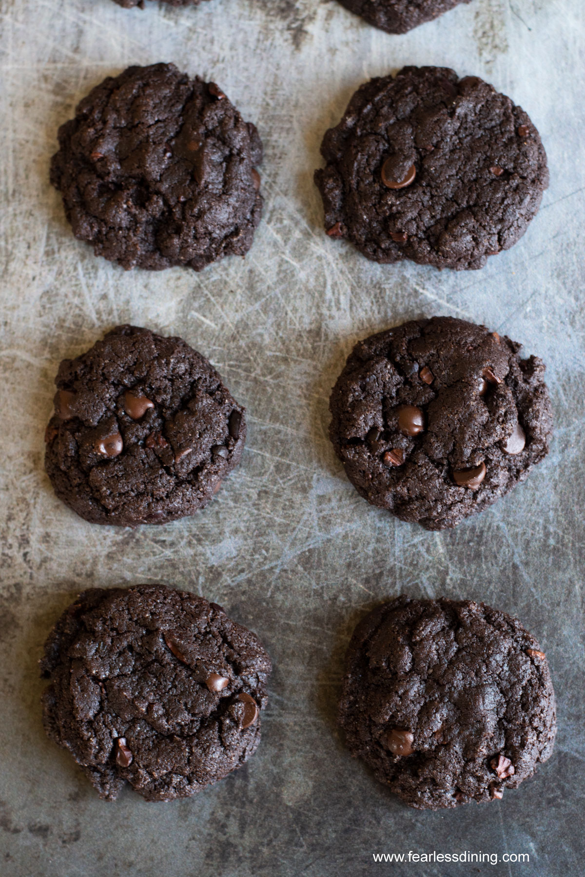 baked espresso cookies lined up on a cookie sheet