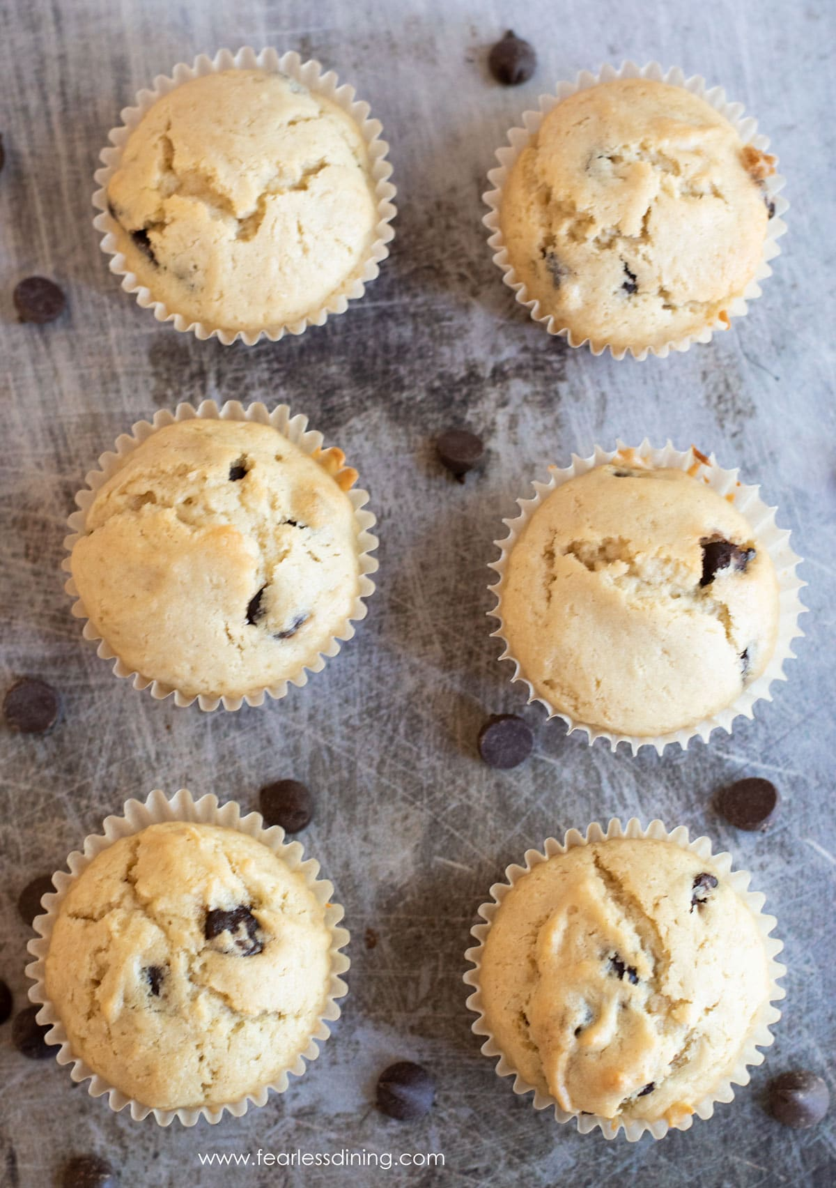 rows of gluten free chocolate chip muffins